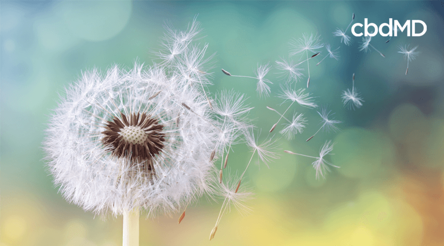 Can CBD Help With Spring Allergies?