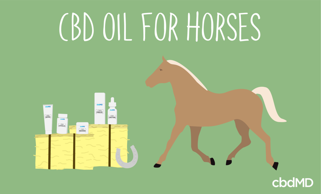 CBD Oil for Horses - Can it Help?