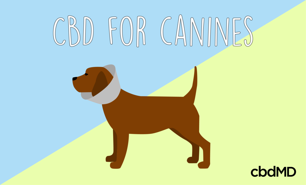 CBD Oil for Dogs - 5 Ways it Helps