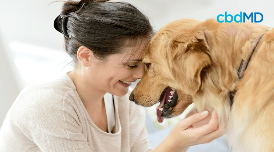 How Much CBD Oil Does Your Dog Need?