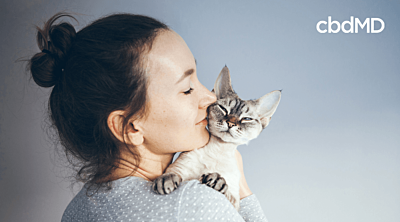 Everything you Need to Know About Essential Oils & Cats